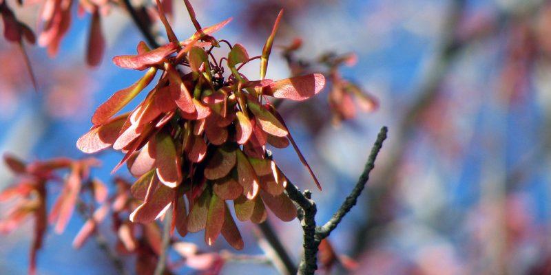 Fördelar med våren