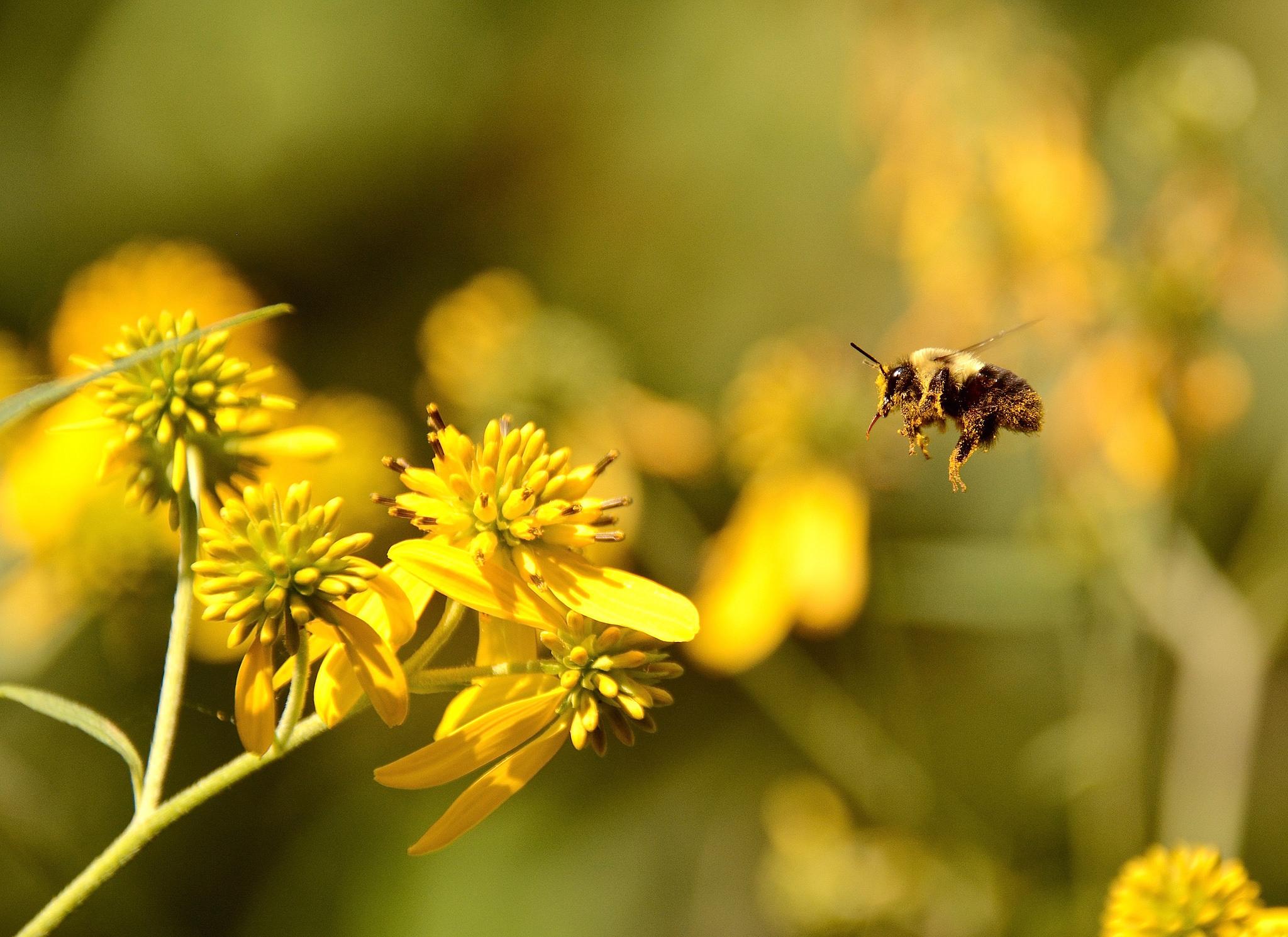 Bin som samlar pollen