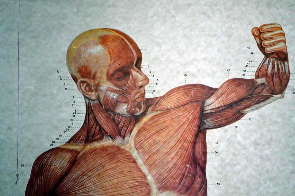 BCAA är viktigt för muskelbyggare