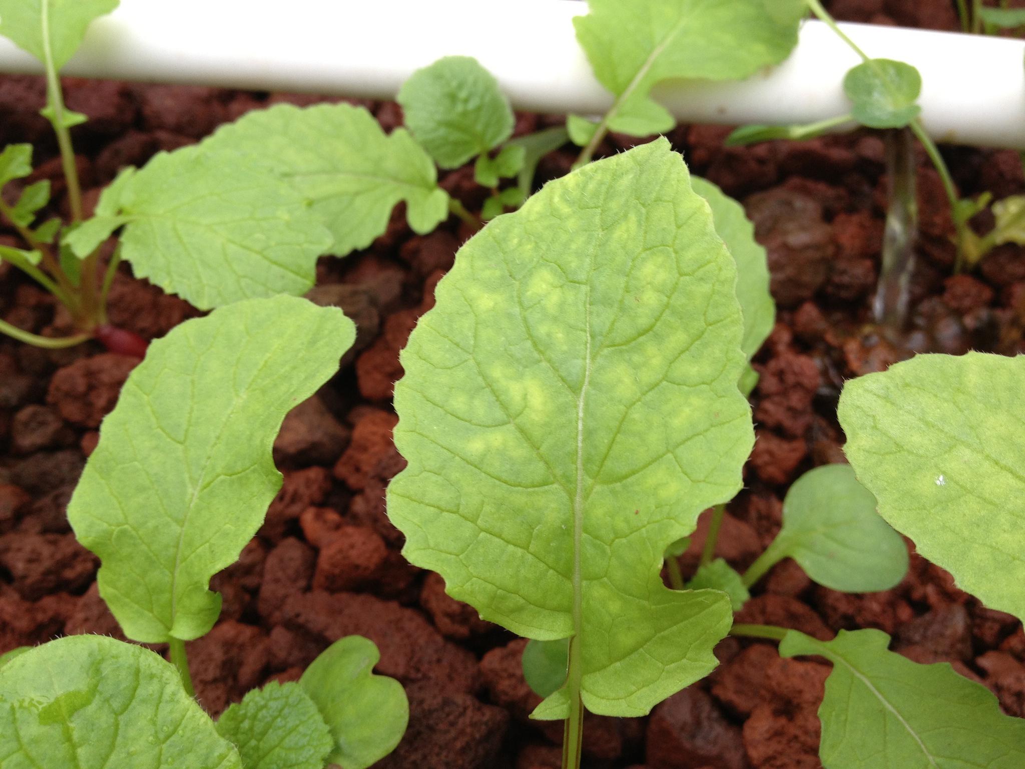 Magnesium finns i bl.a gröna grönsaker